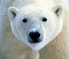 Greenpeace Uses LEGOs to Save Polar Bears