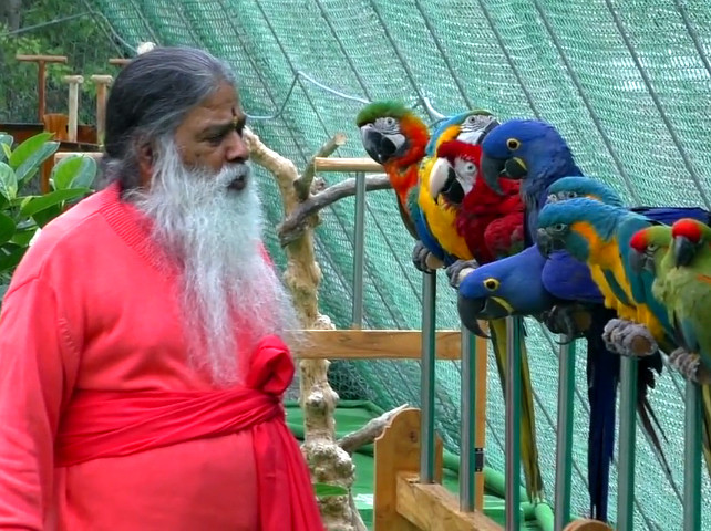 Sri Swamiji conversing with his parrots. Credit: sgsbirds.com video screencap